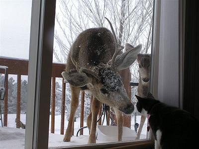 deer-cat.jpg